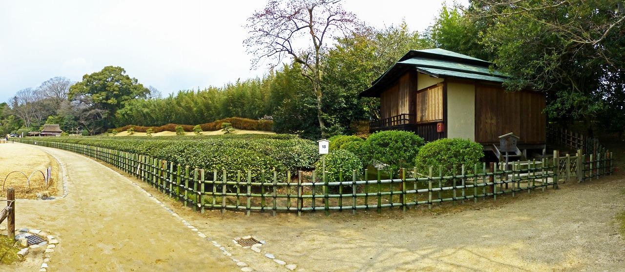s-20150314 後楽園今日の園内茶畑の四ツ目垣ワイド風景 (1)