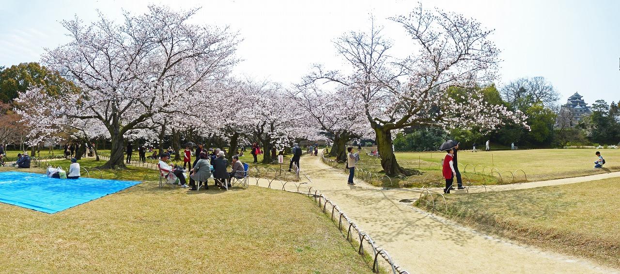 s-20150331 後楽園今日の桜林の様子ワイド風景 (1)