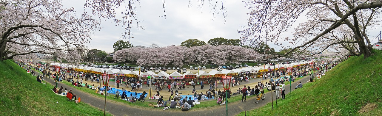 s-20150402 岡山さくらカーニバル会場の朝の様子ワイド風景 (1)