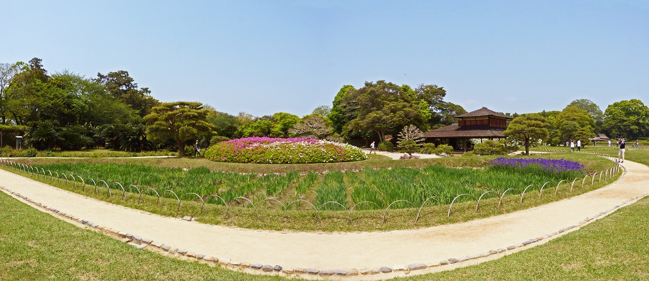 s-20150425 後楽園花菖蒲畑の様子とアヤメの花の咲き具合ワイド風景 (1)