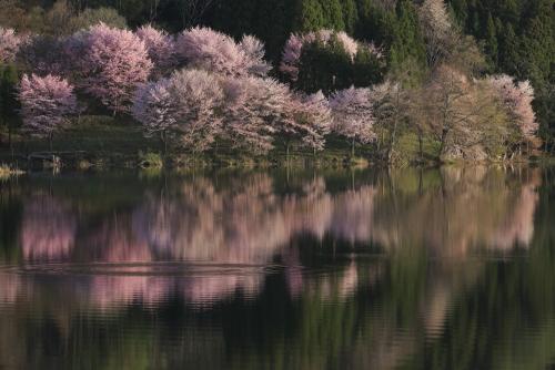 桜講座画像 (2)