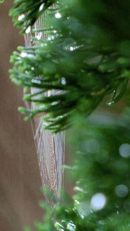 貝塚伊吹にクモの巣