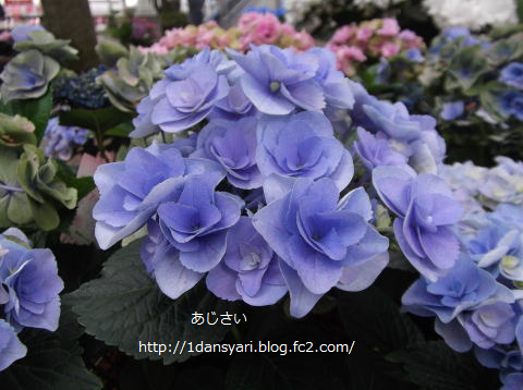 2015_6_29_ajisai2.png