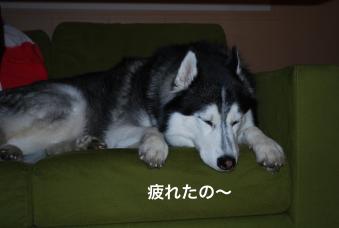 DSC_0095_Fotor.jpg