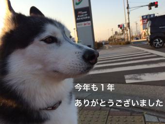 IMG_1633_Fotor.jpg