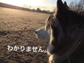 IMG_1760_Fotor.jpg
