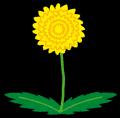flower_tanpopo[1]