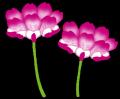 flower_renge[1]