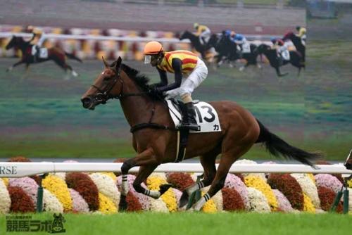 【競馬】ロカ、栗東坂路で一番時計