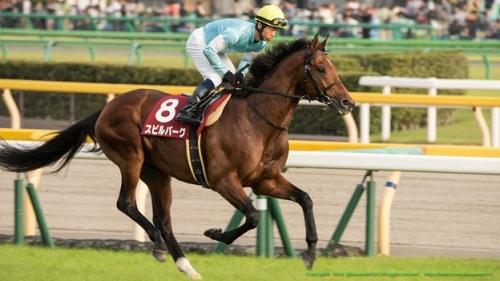 【競馬】毎日王冠のメンツがヤバイハイレベル