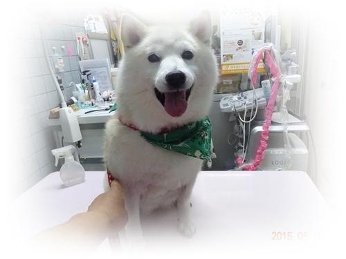 DSC02215動物病院で2