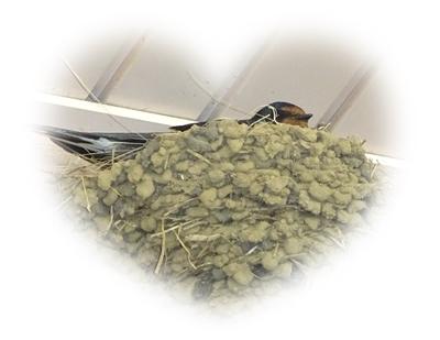 DSC02227シャロームの燕