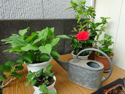 DSC02327年代もの植物