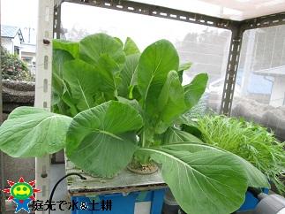小松菜2・23