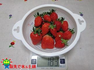 3・17イチゴ