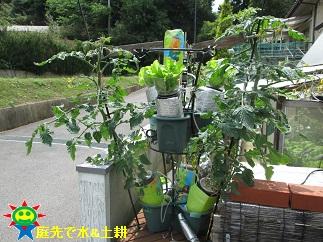 ミニトマト「千果」5・14