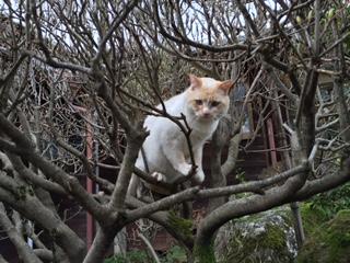 木登り猫04