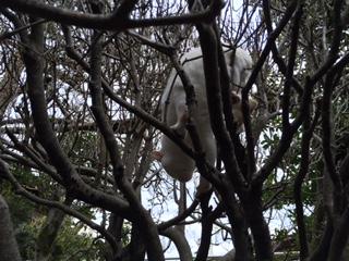 木登り猫02