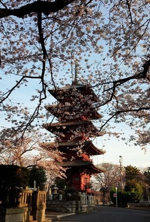 2014-3 池上本門寺