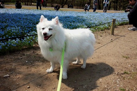 2015-4-25 国営ひたち公園Choco