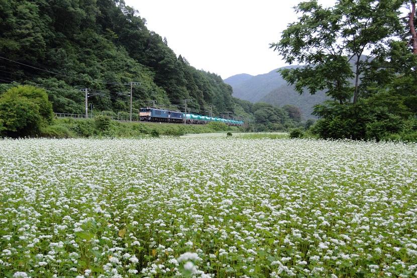 広々と白い花いっぱい!幸せいっぱい!