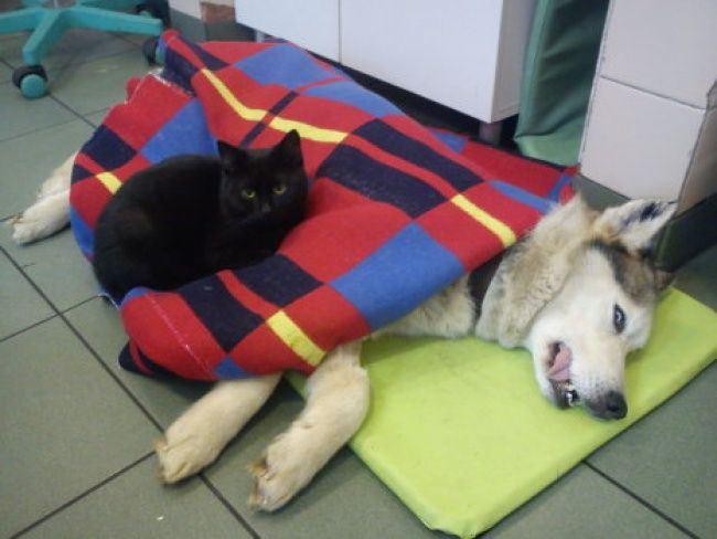 20150415病気の動物たちを看病ス黒猫3