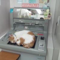 20150425銀行のATM上で昼寝する猫