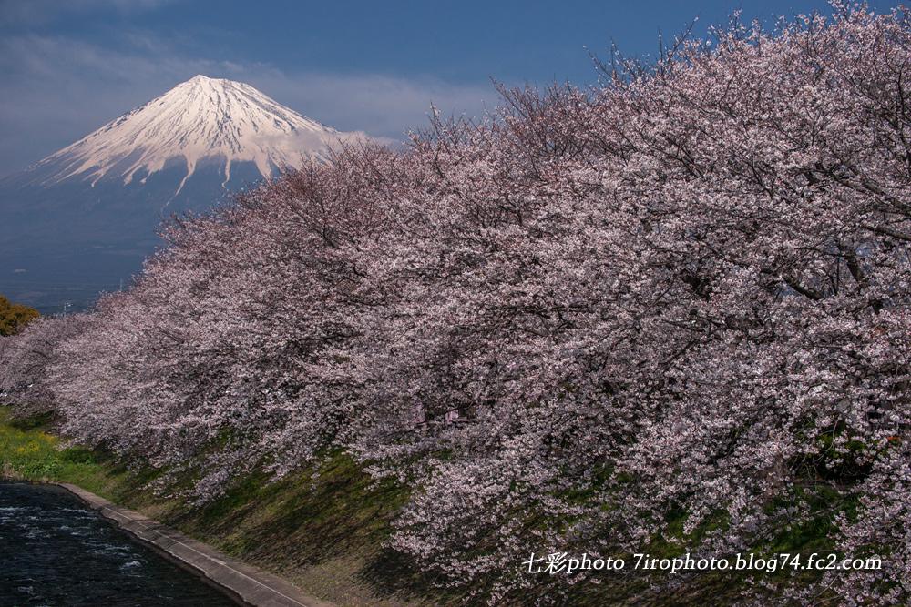 03-28-15_sakura_0081_edited-1.jpg