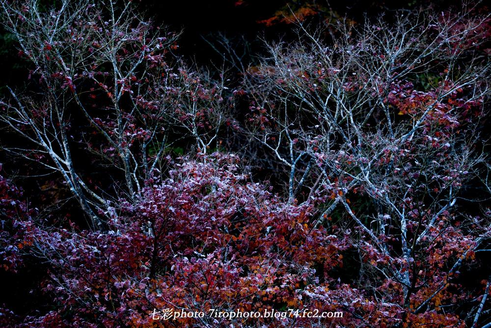 2014-12-07_千葉紅葉2_0002_edited-1