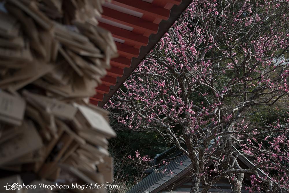 02-21_鎌倉_0115_edited-1