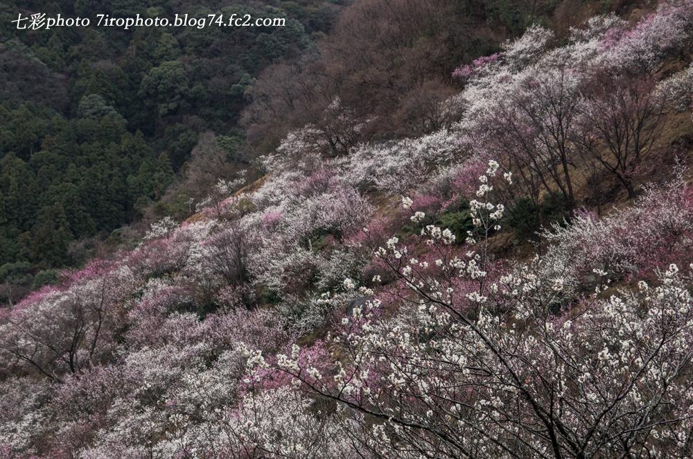 03-06-15_湯河原_0164_edited-1