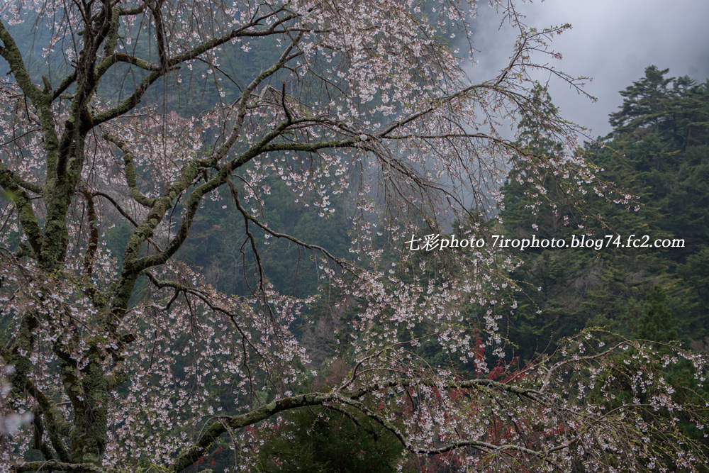 04-04-15_見延山_0032