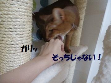P7080738.jpg