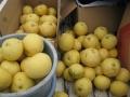 H27.6.13グレープフルーツの実収穫(最終)@IMG_5405