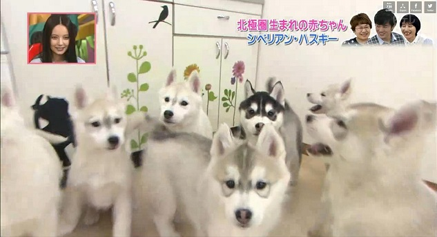 志村どうぶつ園 (4)