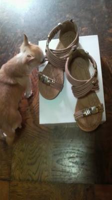 プティと靴2