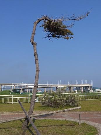 祝津親水緑地13