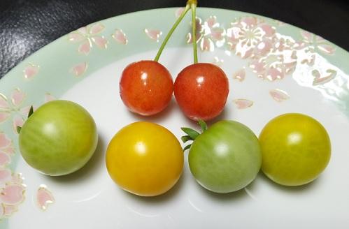黄金トマト2