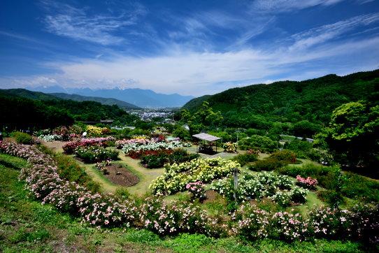 多種のバラ咲く園内