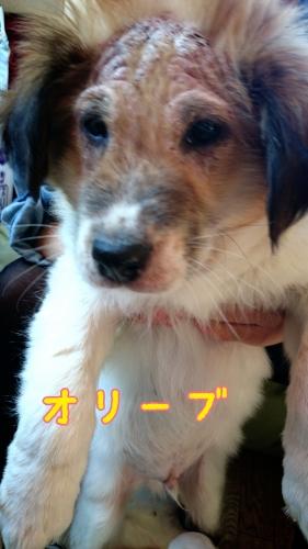 2015-01-23-23-01-47_deco.jpg