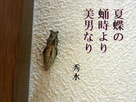 natsucho01.jpg