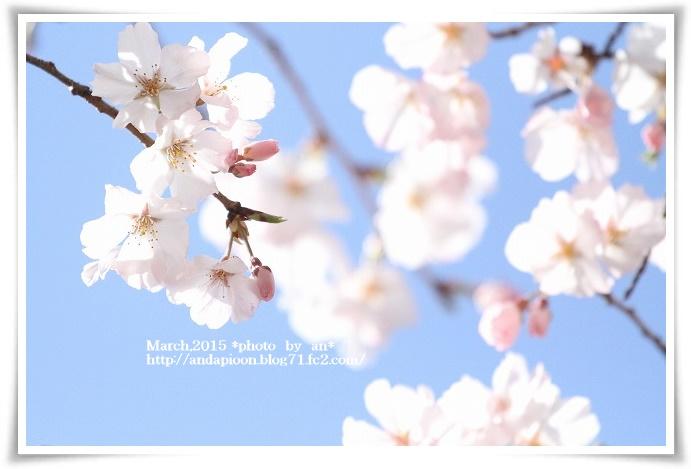 20150324 IMG_1364
