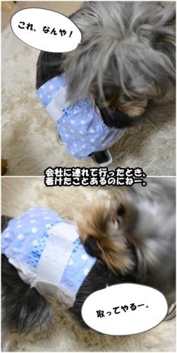 cats 0314①