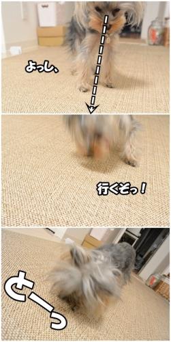 cats 0330