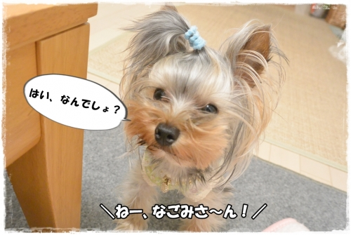 DSC_4209 0412
