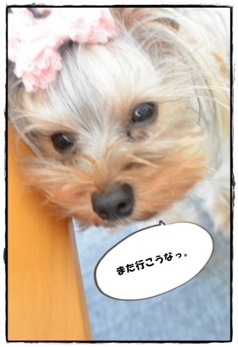 DSC_4308 0416