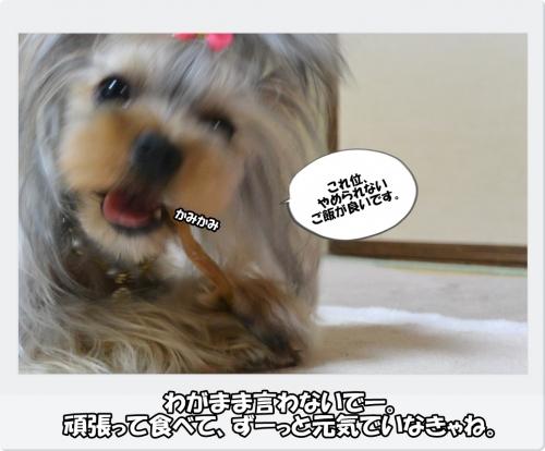 DSC_4633.jpg