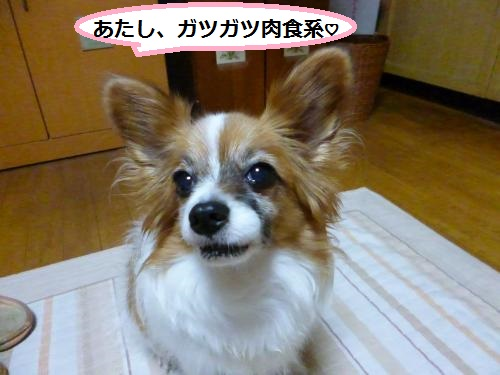 P1050388_convert_20150427153319.jpg