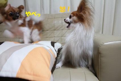 b201501143.jpg