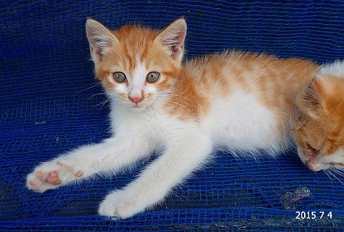 s-猫20150704
